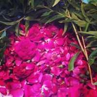 Roses_and_lemon_verbena