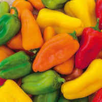 Mixed_sweet_peppers